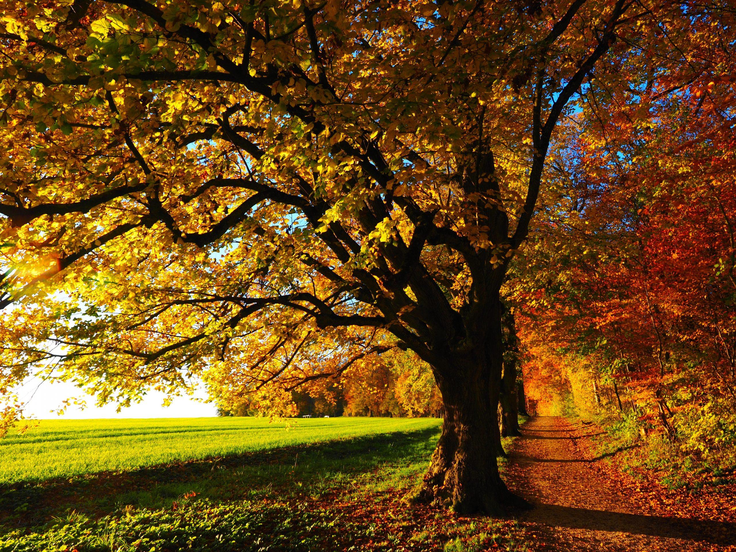 autumn-autumn-mood-colorful-edge-of-the-woods-35778