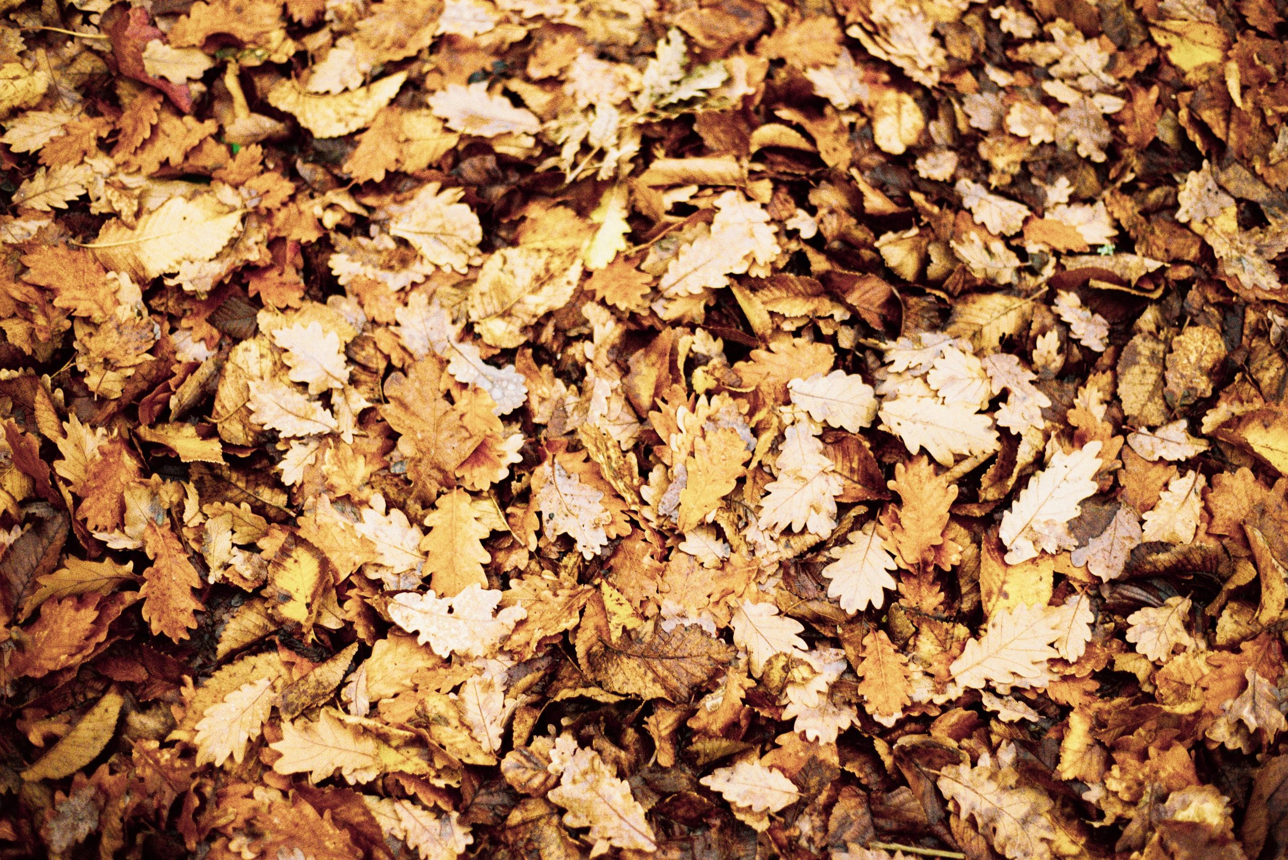 close-up-photo-of-dry-autumn-leaves-on-ground-2760324