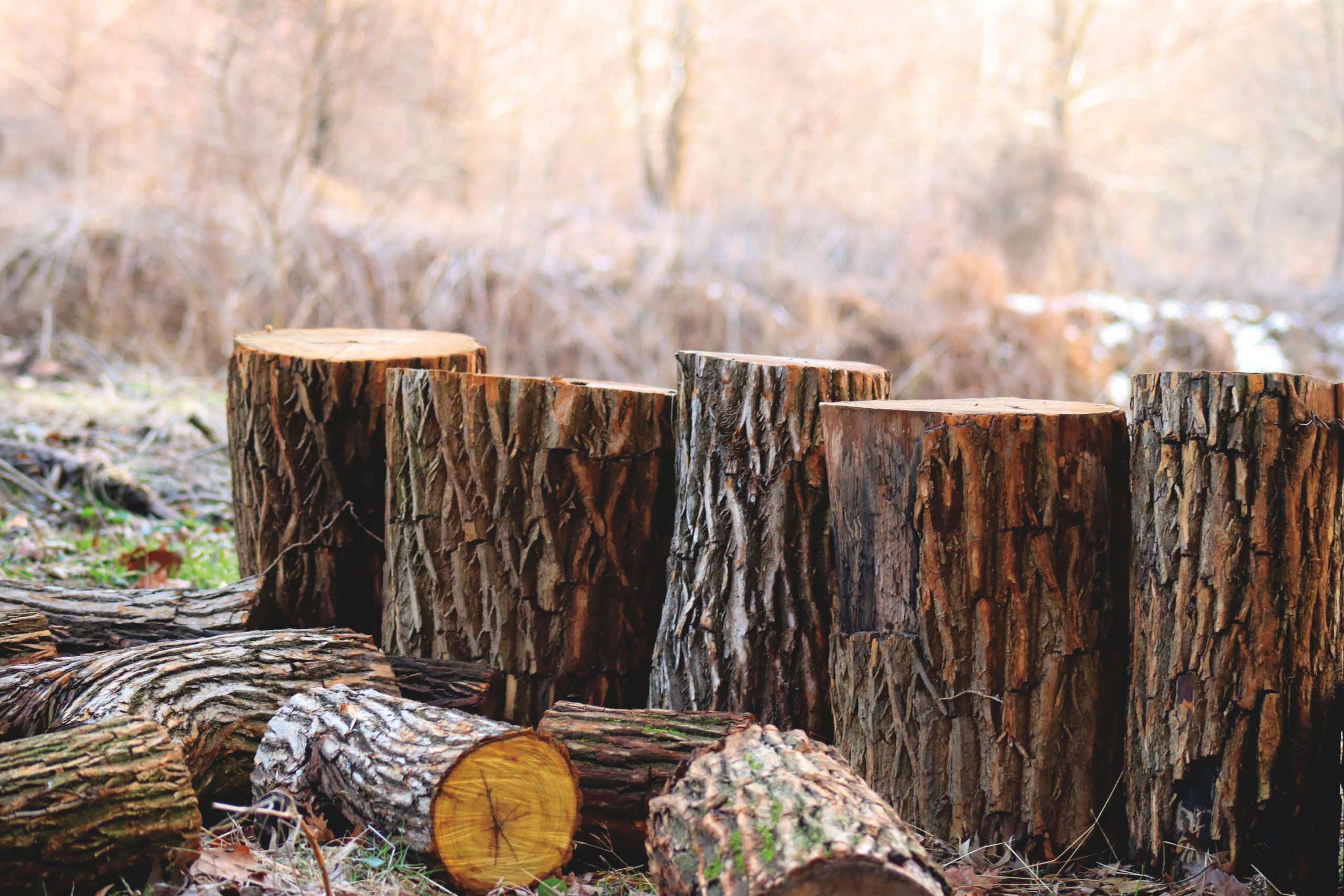 depth-of-field-photography-of-brown-tree-logs-923167