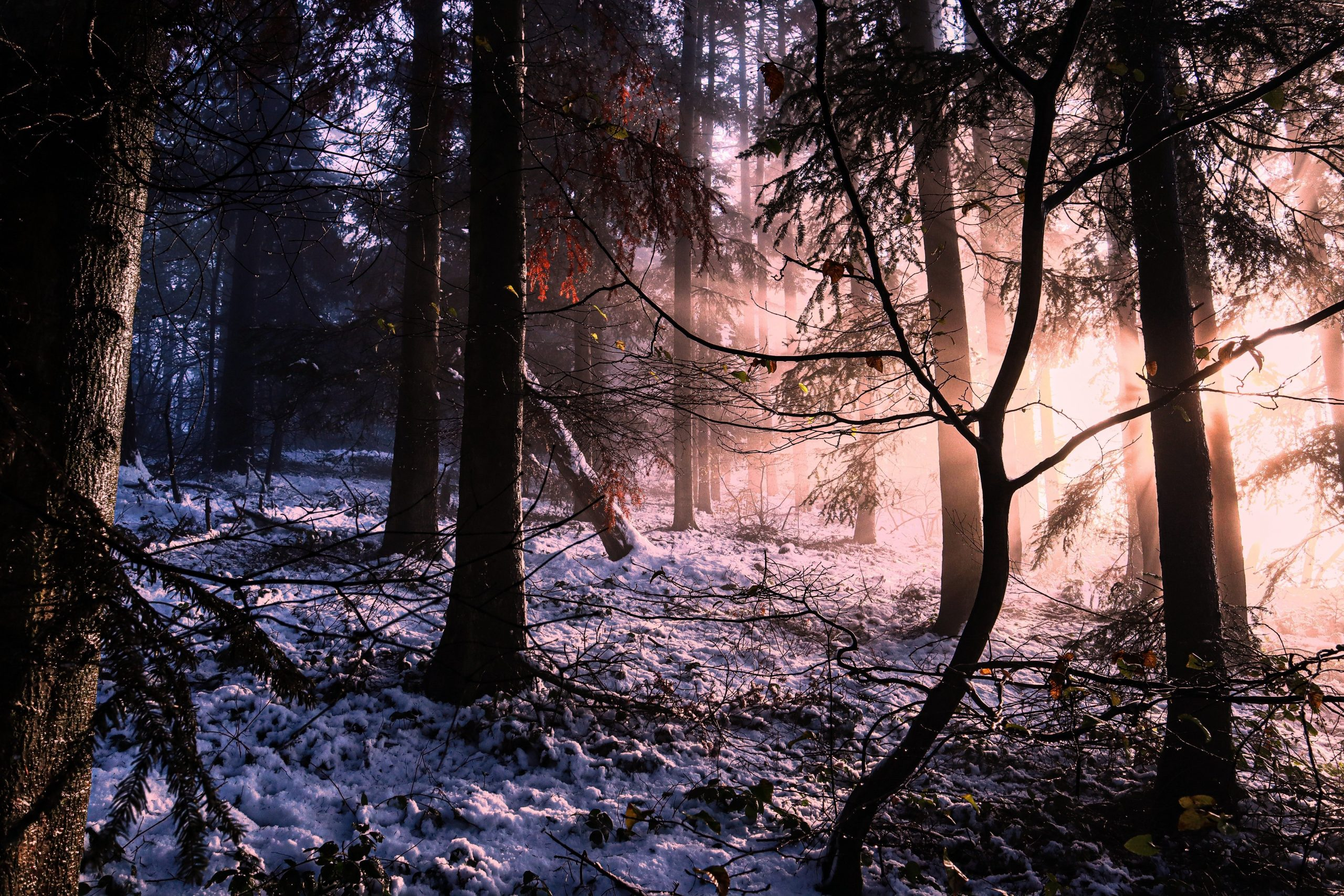 In the winter forest at sunset